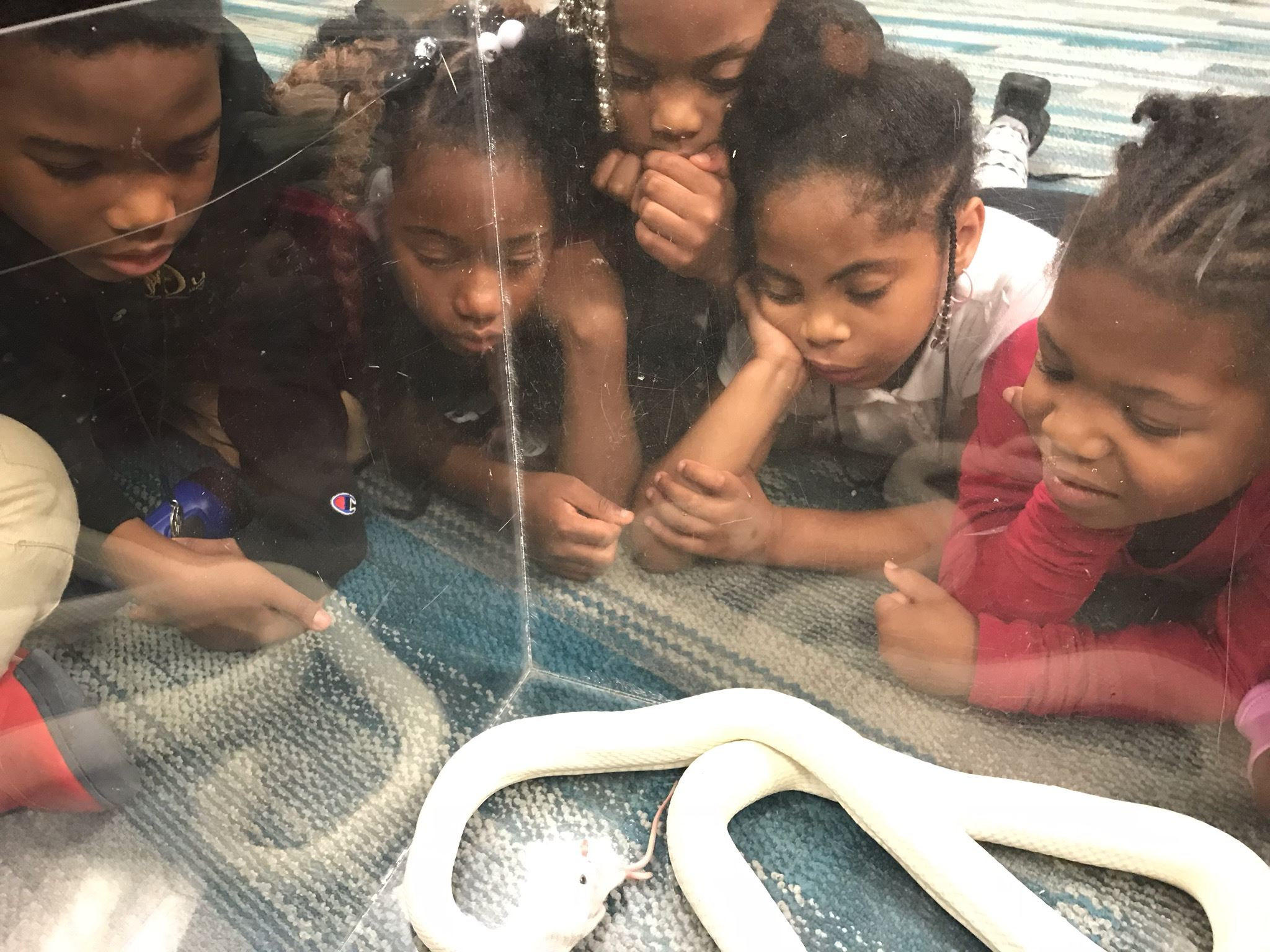 Kids Gathered Around a Glass Snake Cage