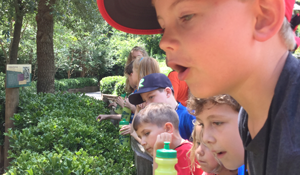 boys holding bubbles and looking at an animal exhibit