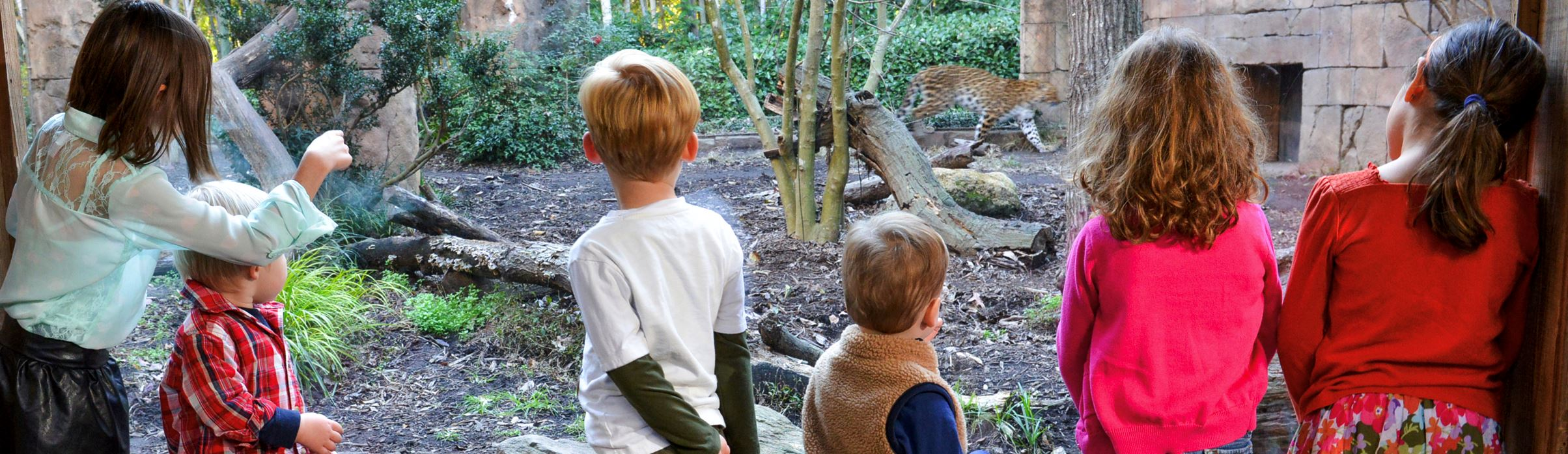 Photo of children watching a leopard