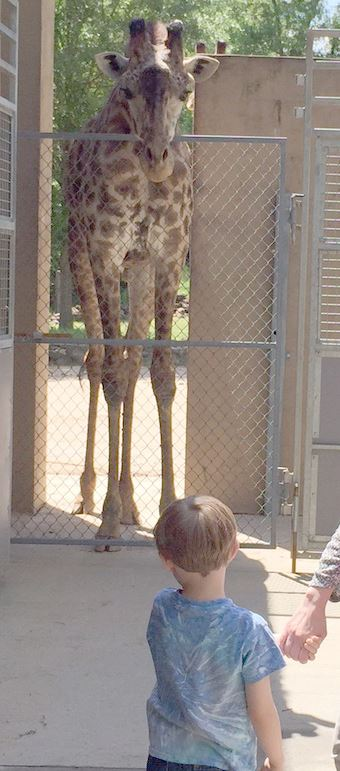 boy watching giraffe